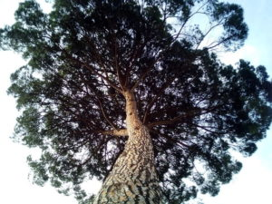 Zirbenholz der Schreinerei bei Erding